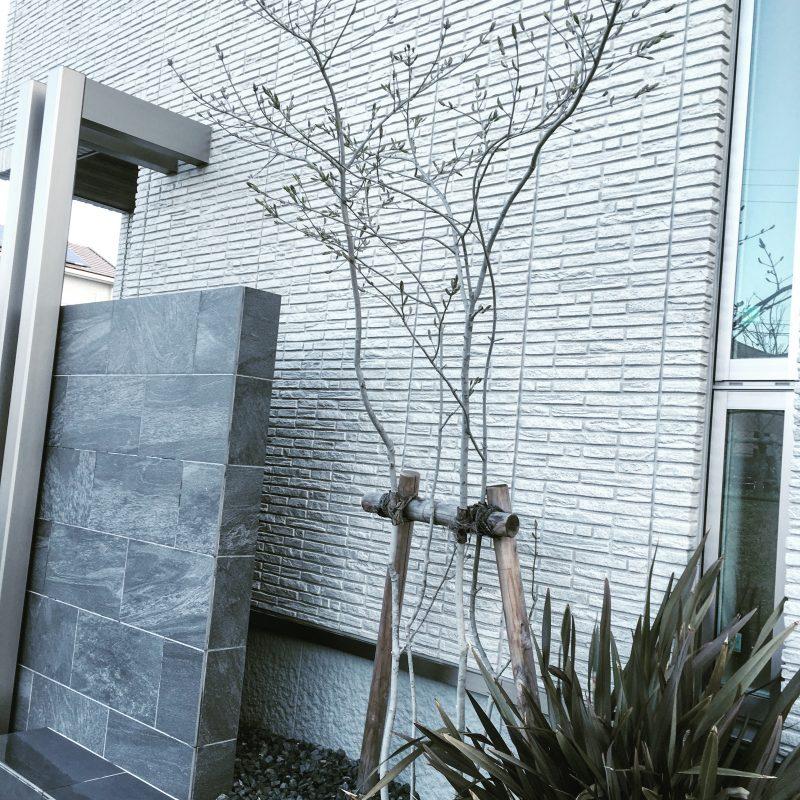 """積水ハウス イズロイエシリーズの外壁""""ダインコンクリート"""" …と少し外構と植栽"""