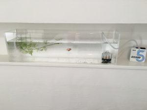 アクリル水槽 DIY