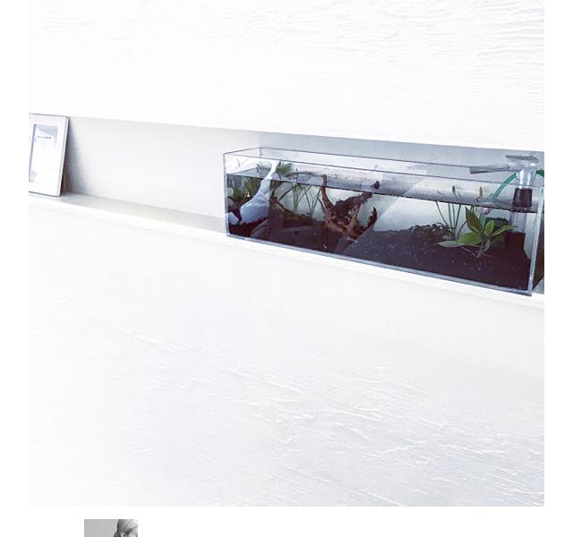 ★掲載情報★RoomClip magに手作り水槽が掲載されました♪