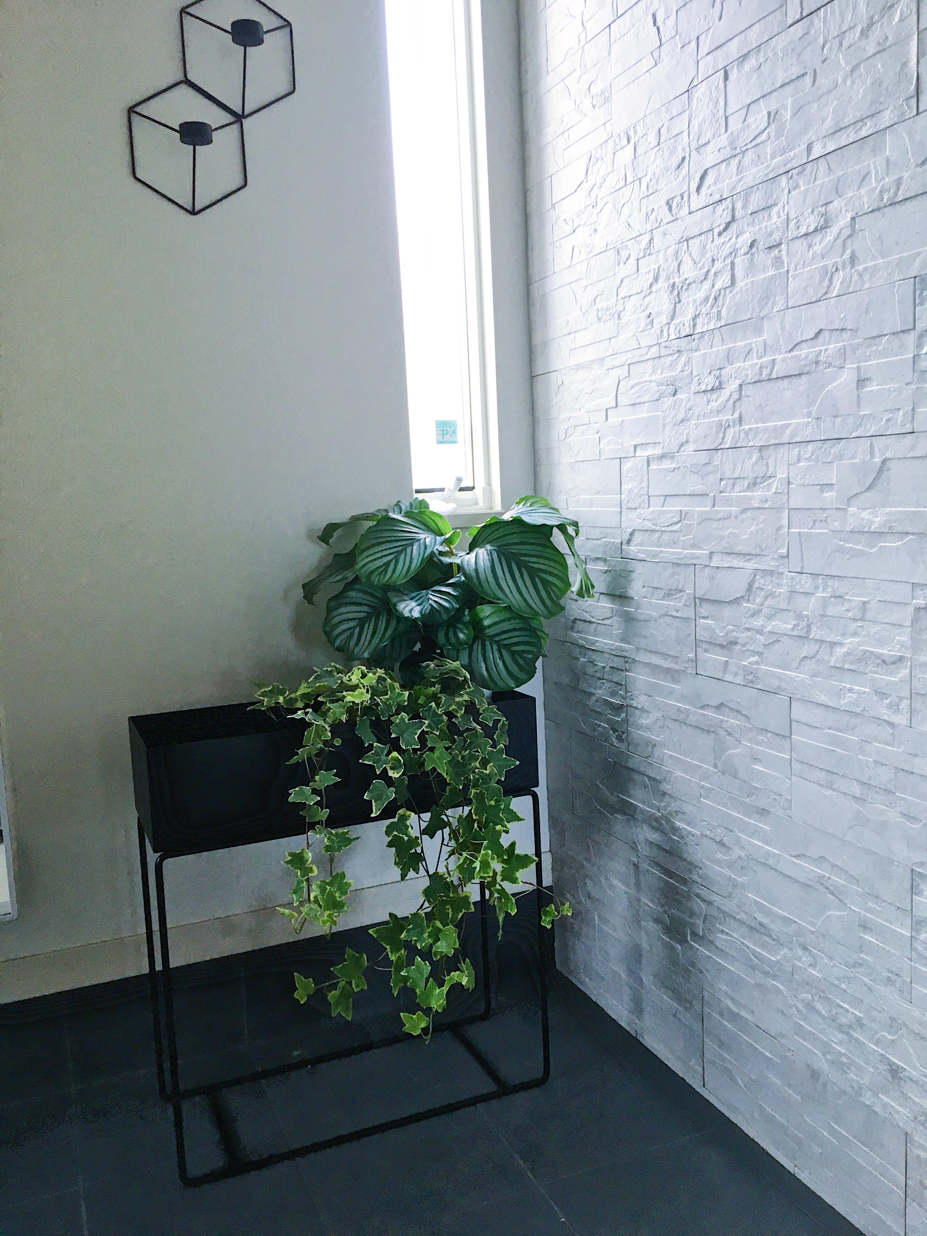 ★北欧★fermlivingのプラントボックスと新たなレアもの観葉植物!