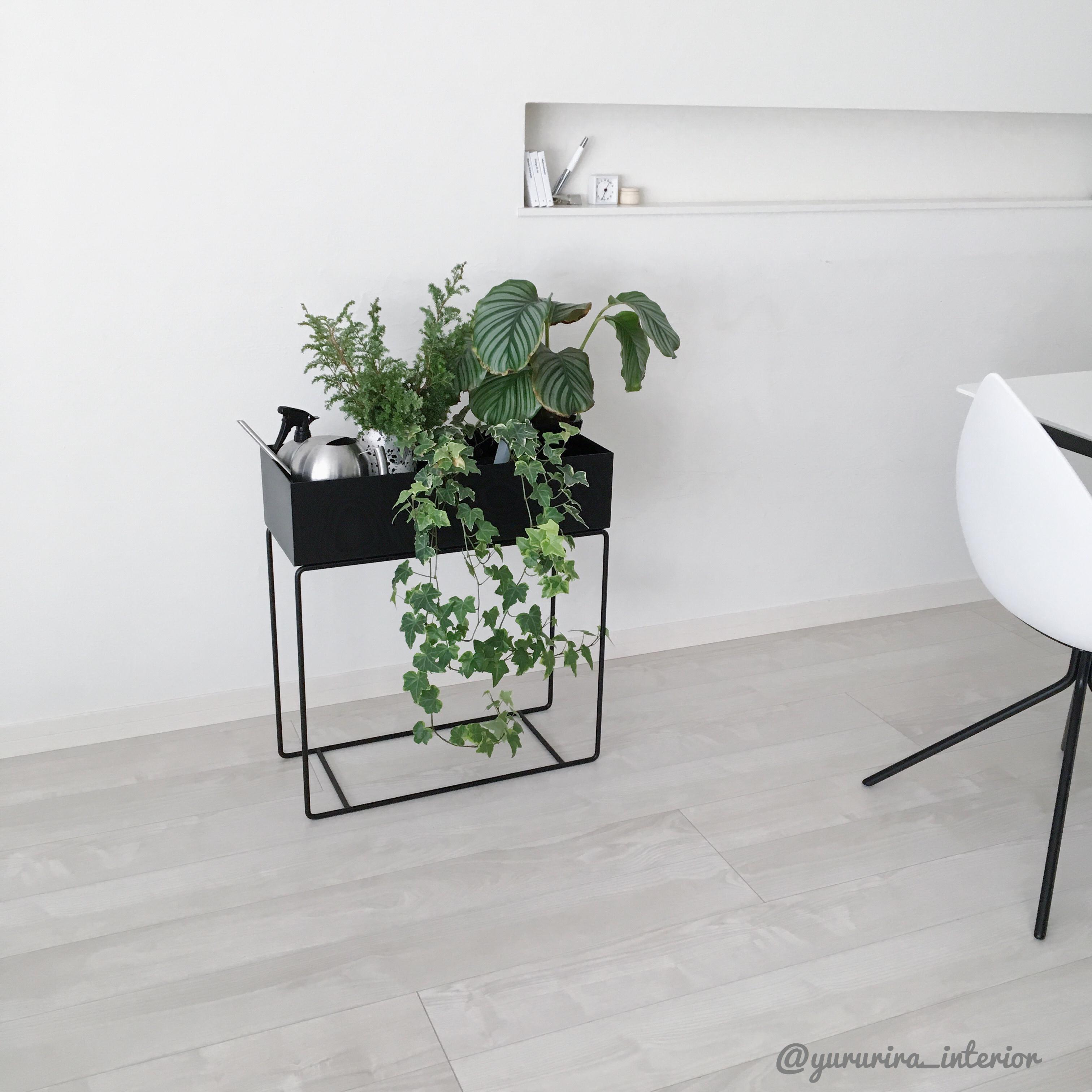 北欧インテリア★fermlivingのプラントボックスに冬植物を飾りました♪