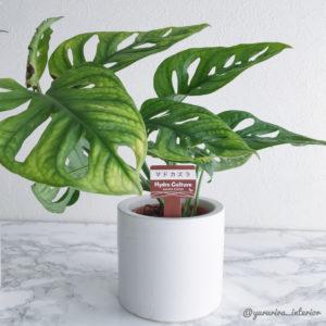 観葉植物 インテリアグリーン