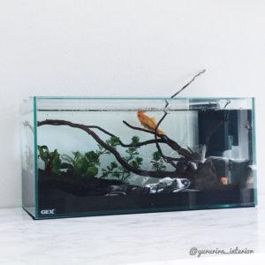 金魚のいる暮らし 水槽のある暮らし