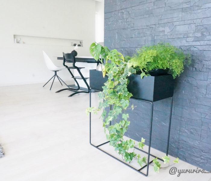 ★みどりのある暮らし★レアな観葉植物を新たにお迎えしました