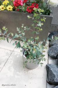 エクステリア 花壇