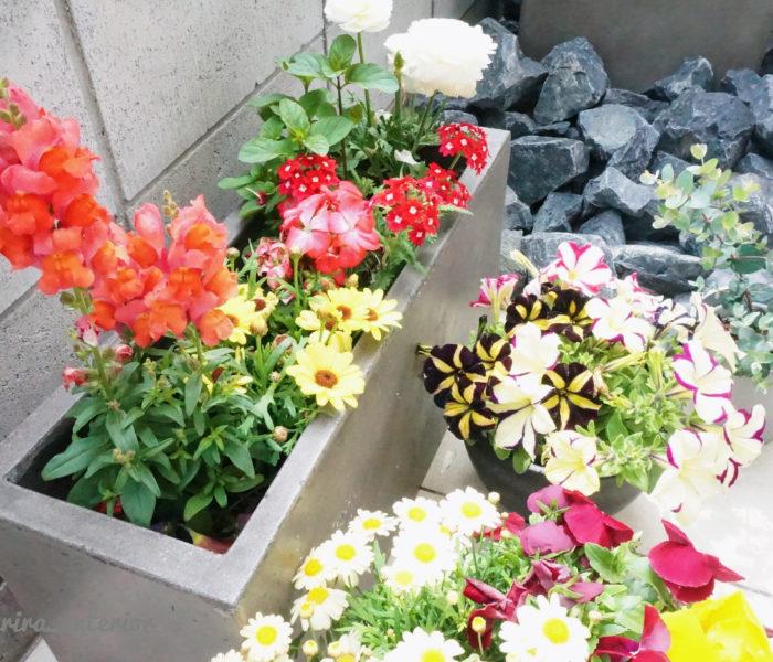 ★庭活★軽量セメントプランターでミニ花壇を作りました♪