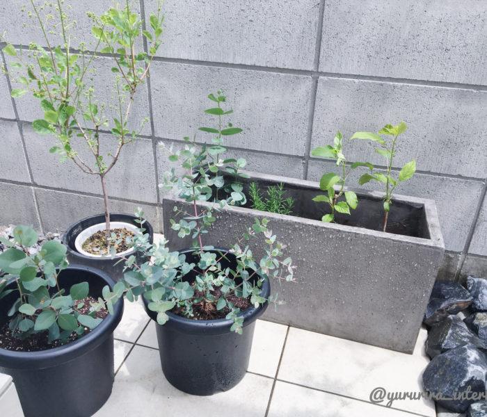 ★庭活★ユーカリ、スモークツリー…庭に新たな植物を植えました♪