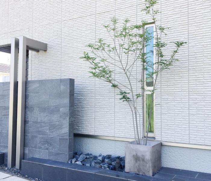 外構の話と地植え→鉢植えにして枝だけになった植栽が復活!