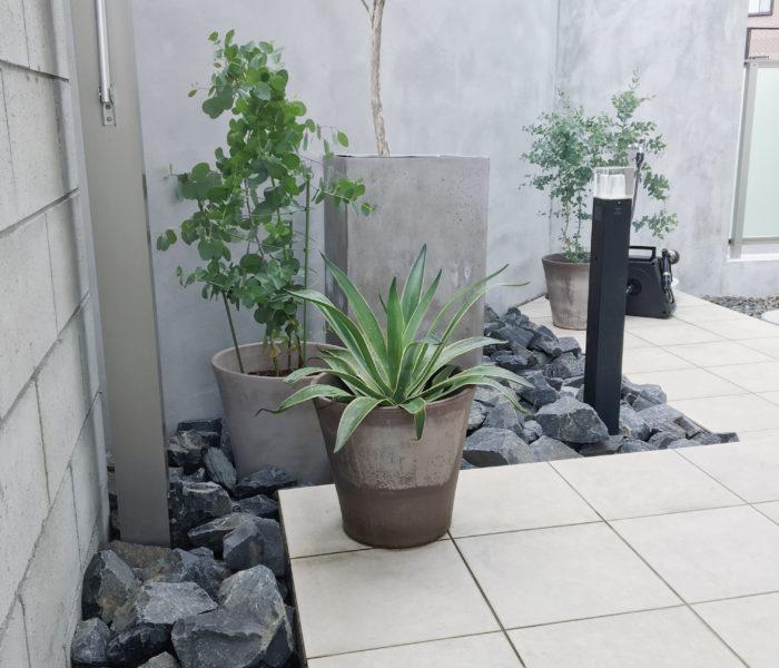 庭活★新入りのアガベとユーカリさんのいる最近の庭