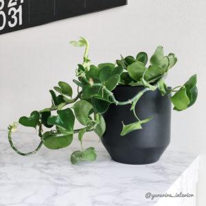 みどりのある暮らし 観葉植物インテリア