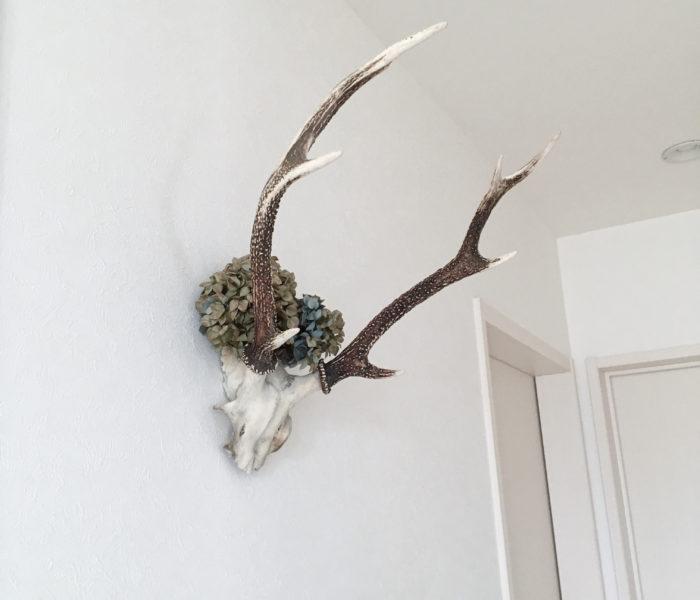 目指せ海外インテリア★鹿の頭を2階廊下に飾りました。