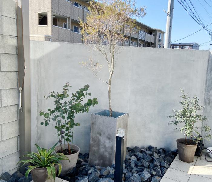 いよいよ庭活開始♪現状の庭の植物とこれからの庭の話