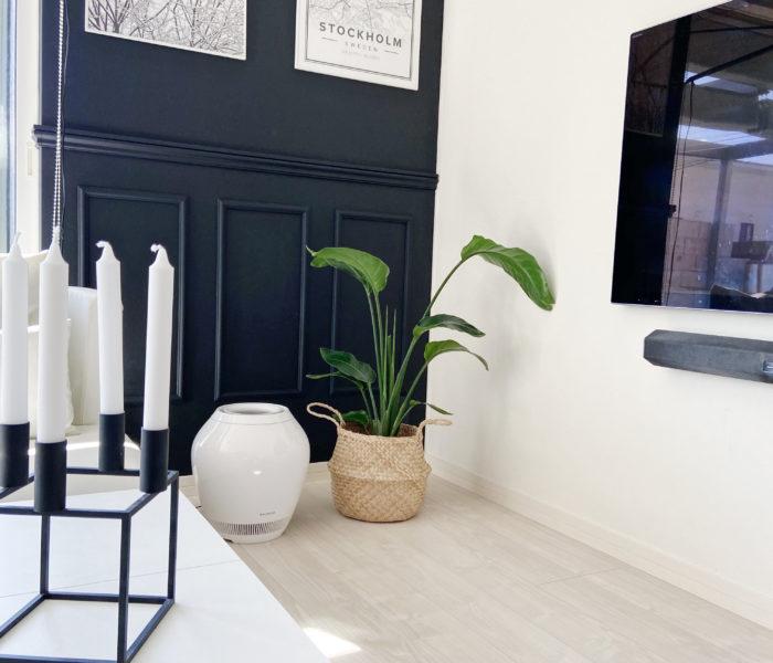 みどりのある暮らし★驚き価格で買ったリビングの優雅な観葉植物