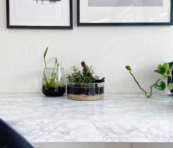 IKEA花瓶で♪水草×石×流木で小さな熱帯雨林レイアウト