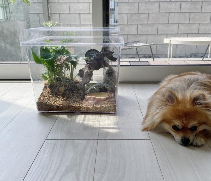 閲覧注意!ダイソーで作ったカナヘビ水槽とソスグレのプラントスタンド