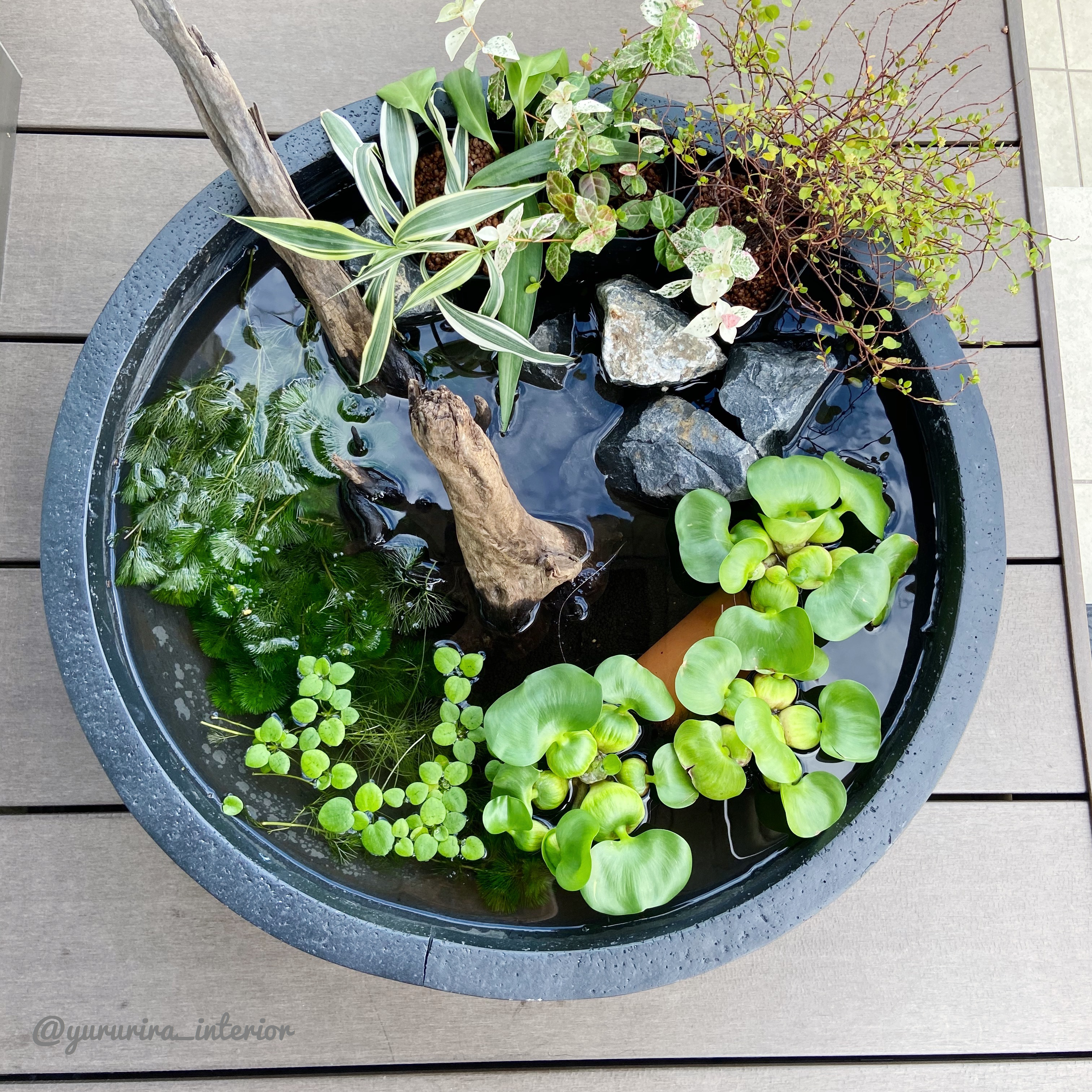 庭活♪楽天購入の鉢で小さな金魚ビオトープを作りました