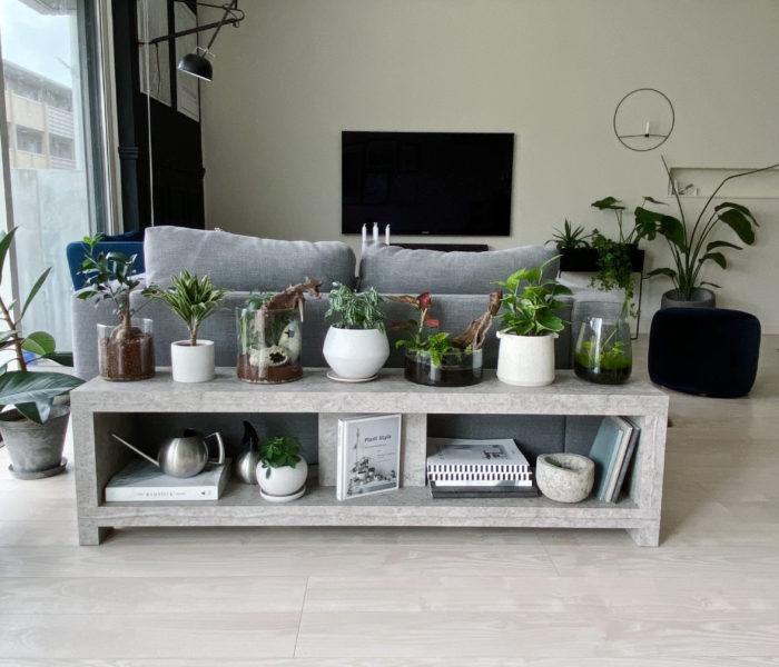 """カナヘビ水槽解体…新たに作った""""熱帯雨林""""な寄せ植え"""