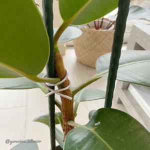 観葉植物 育てやすい
