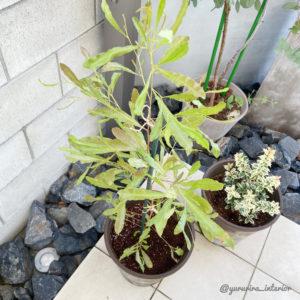 植栽 おすすめ
