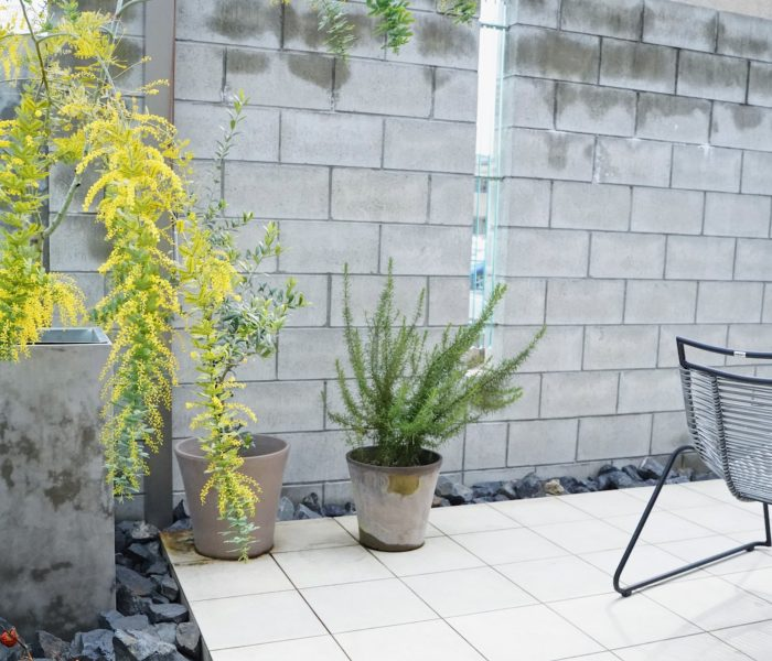 """ミモザの日★雨上がりの庭と""""やってよかった""""外構のこと"""