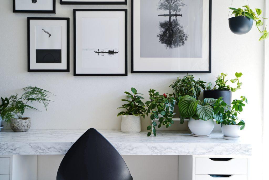 簡単10分DIYで観葉植物を美しく魅せる方法♪